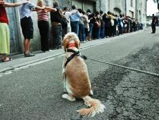 2012_streetwalker_chalon_FR_by-tomasz-foltyn_7713