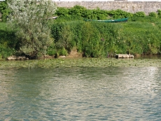 32. WATER LILIES (NYMPHÉAS)