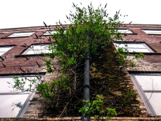 18_Vertical jungle_STREETWALKER Norwich_UK